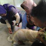 KLB Rabies di Sanggau - DPP