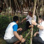 Monitoring bantuan benih kelapa sawit