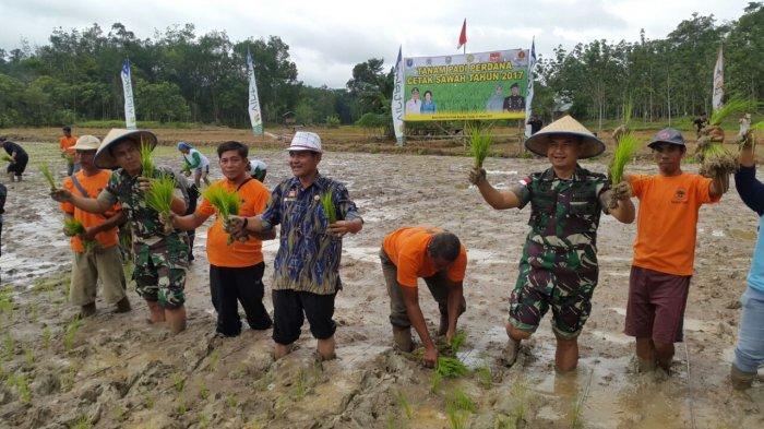 Penanaman Padi Perdana Cetak Sawah 2017