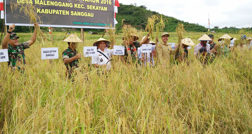 Panen Raya Padi Sawah Kelompok Tani Desa Malenggang