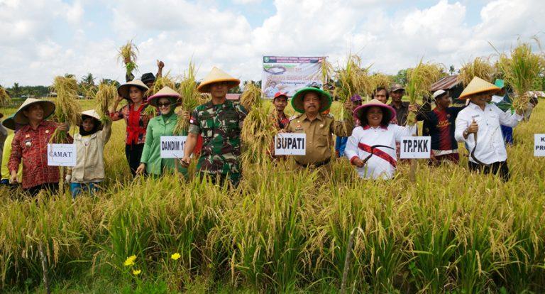 Wakil Bupati Sanggau Panen Raya Padi, Sayur Sayuran dan Peresmian Tempat Penggilingan Padi