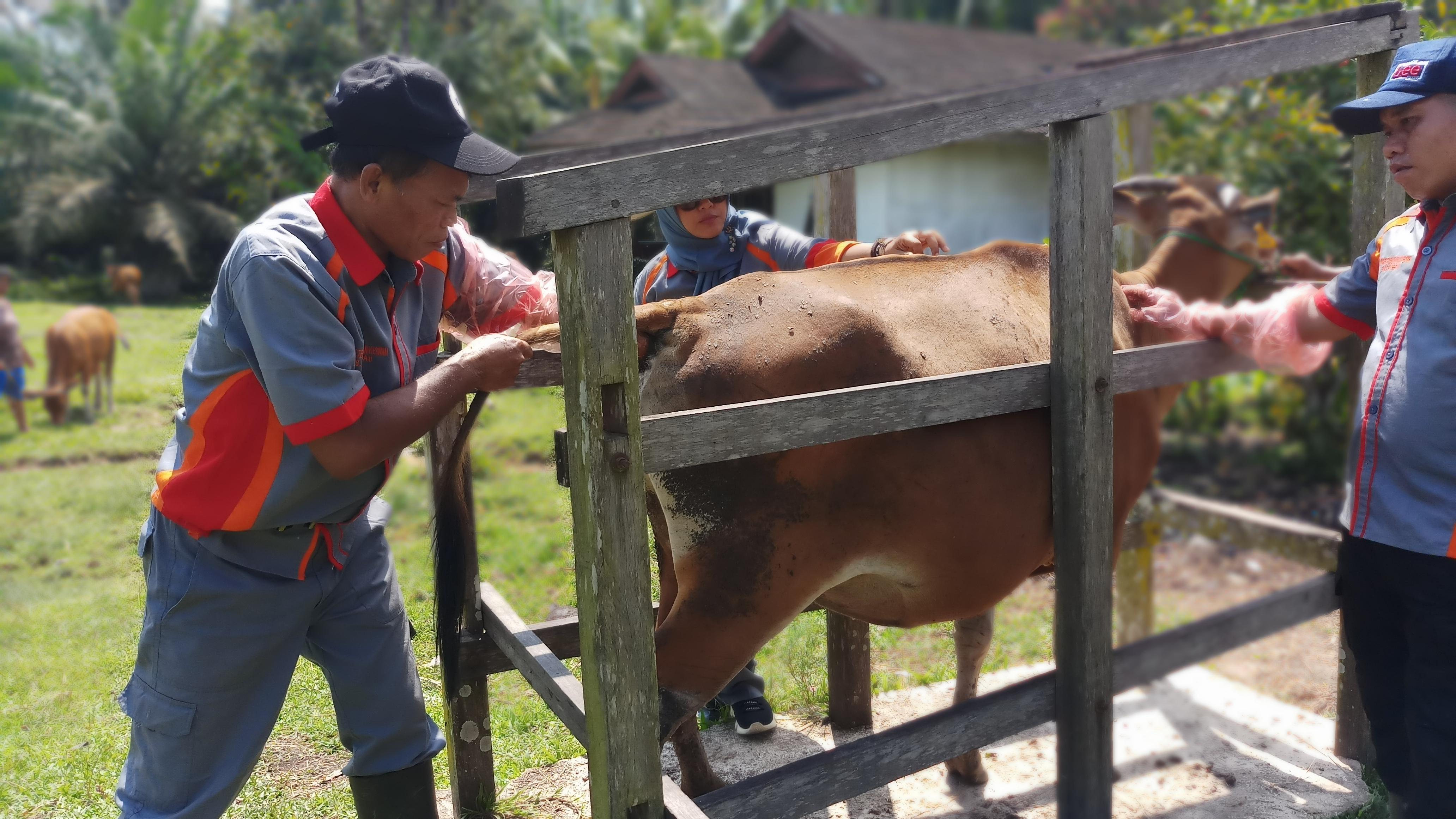 Disbunnak Sanggau galakan Pelayanan Kesehatan Hewan
