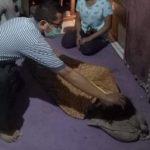 Seorang Wanita di Kecamatan Parindu, Tewas Usai Dianiaya Suaminya