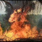Upaya Pemadaman Lahan di Entikong Terkendala Angin Kencang dan Sumber Air Jauh