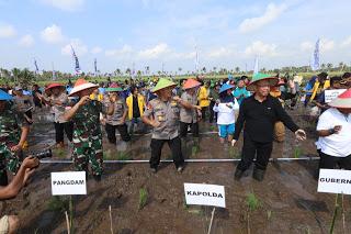 Wisata Tanam Padi Milenial, Kapolda Bersama Gubernur dan Pangdam Nyemplung Sawah