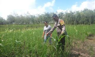 Solusi Petani Mengurangi Pembakaran Lahan Sudah Berjalan