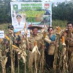 Bupati Sanggau Panen Perdana Jagung Hibrida di Dusun Dohik Empaning, Desa Binjai