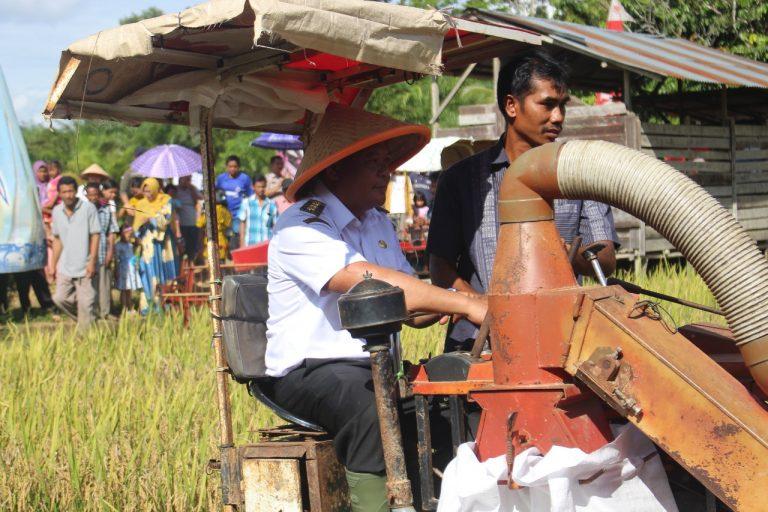 Bupati Sanggau Melaksanakan Panen Raya Padi Poktan Lestari Dusun Bengkuang Sari, Desa Kasro Mego, Kecamatan Beduai