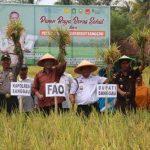 Bupati Sanggau Panen Jagung dan Padi Organik dan Launching Beras Sehat Serumpun Borneo dan Beras PH
