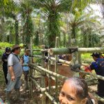Dukungan Legislatif Masa Reses Dalam Kegiatan SIKOMANDAN Disbunnak di Desa Sungai Jaman Kecamatan Tayan Hilir