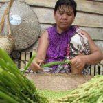 Persatuan Peladang Tradisional Kalimantan Barat Sayangkan Vonis Bersalah Peladang Sanggau