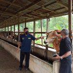 Pemantauan dan Pengawasan Pemotongan Ternak Sapi Menjelang Lebaran Idul Fitri 1441H