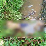 Kronologi Warga Meliau Sanggau Tersengat Listrik Alat Setrum Ikan, Ditemukan Tak Bernyawa di Kolam