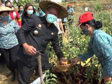 Tekan Angka Stunting, Bupati Sanggau Dorong Masyarakat Manfaatkan Lahan Pekarangan Untuk Bercocok Tanam