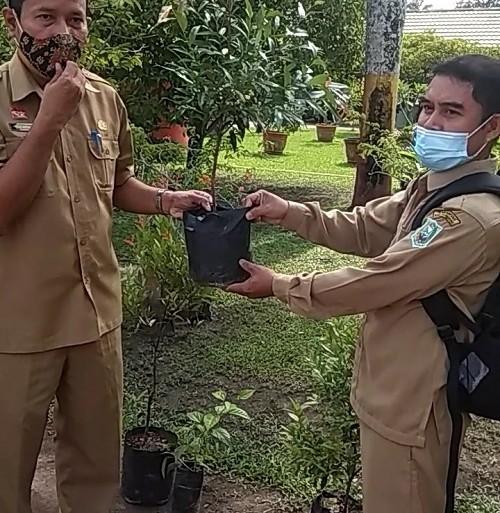 Dukung Penghijauan Sekolah, DLH berikan bantuan Bibit Tanaman ke SMPN 10 Sanggau – Dinas Lingkungan Hidup