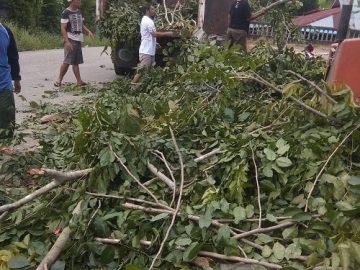 MTSN 1 Sanggau Tebang Pohon, DLH bantu angkut dan buang ke TPA – Dinas Lingkungan Hidup