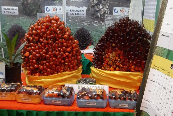 Apkasindo Sanggau : Pabrik tanpa kebun sawit ancam stabilitas tata niaga