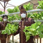 Panen Sayuran Di Kebun Hatinya PKK, Bupati Sanggau: Menjadi Contoh bagi Masyarakat Bagaimana Manfaatkan Lahan Untuk Dijadikan Sumber Pangan