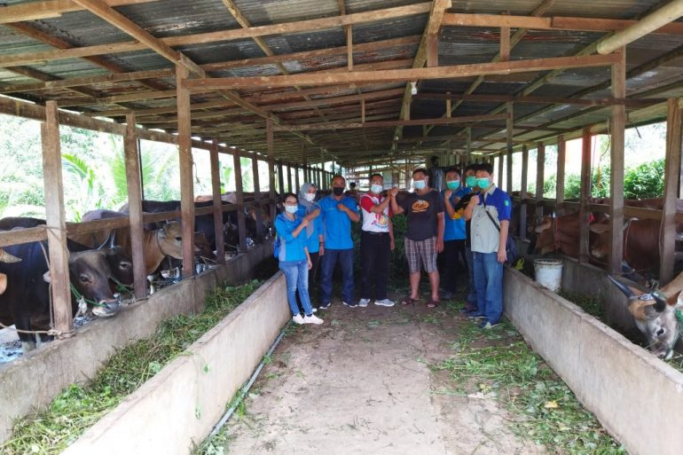 DISBUNNAK Layani Pemeriksaan Layak Kurban Untuk Ternak Di Kecamatan Kapuas