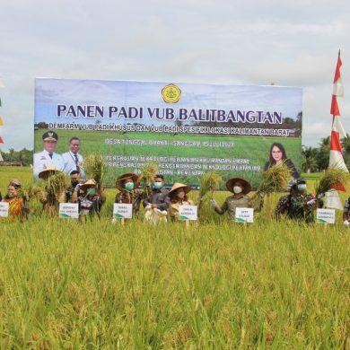 Panen Padi Perdana Varietas Inpari 37 di Desa Tunggal Bhakti, Wakil Bupati Sanggau Ungkapkan Hal Ini