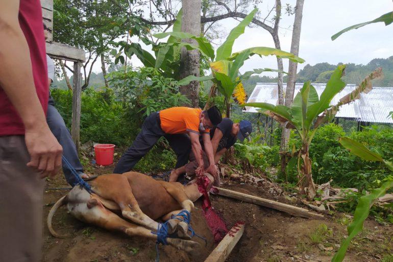 Peringati Hari Raya Idul Adha, Dinas Perkebunan dan Peternakan Kabupaten Sanggau laksanakan pemotongan hewan Qurban
